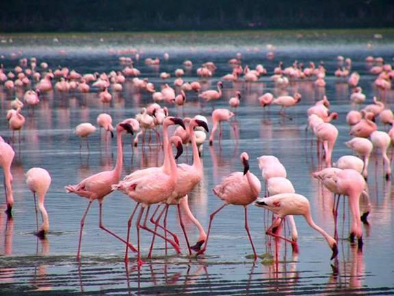 Картинки по запросу озеру Найваша